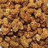 Organic Raw White Golden Mulberries