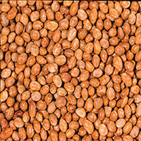 Organic Soy Nuts <p><strong>Why are Organic Soy Nuts good for you?  </strong>                                      &nb