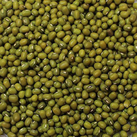 Mung Bean Sprouts <p>Mung beans are commonly used in Chinese cuisine as well as in the cuisines of Burma, Sri Lanka, Thailand, Japan, Korea, Philippines, Bangladesh, Pakistan, India, Indonesia, Vietnam, and other parts of Southeast Asia. </P> 16 oz Bag  $9.99